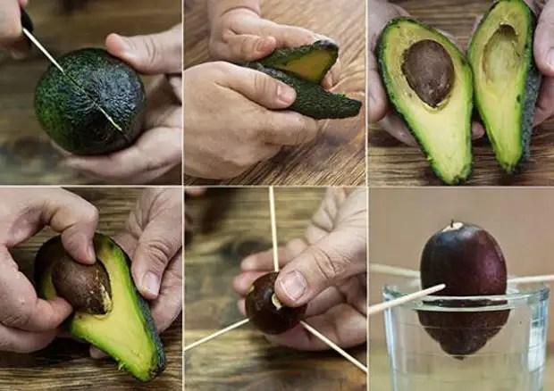 """Результат пошуку зображень за запитом Как вырастить авокадо из косточк"""""""