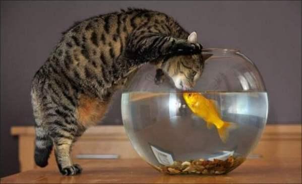 Да не бойся ты, рыбка! я это... просто поговорить)) - Все ...