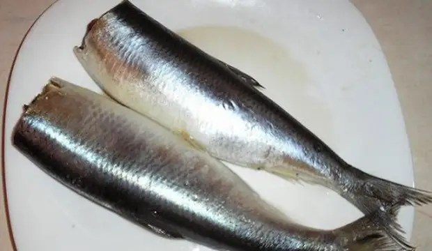 Recipes: Salted herring - 17 best recipes. How to salute the herring at home tasty?