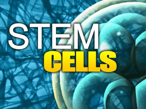 Stem Cell Research on Arthritis