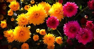 """Sveicam ar veiksmīgu uzstāšanos pianistu festivālā """"Kad mārtiņrozes zied…""""!"""