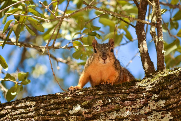 Leaves Squirrel Tree