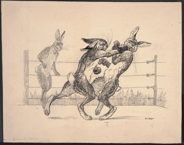 You are currently viewing Rabbit Boxing!