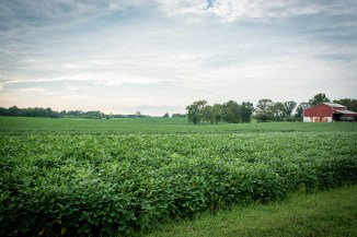 Tennessee Farm Tour Soybean Field