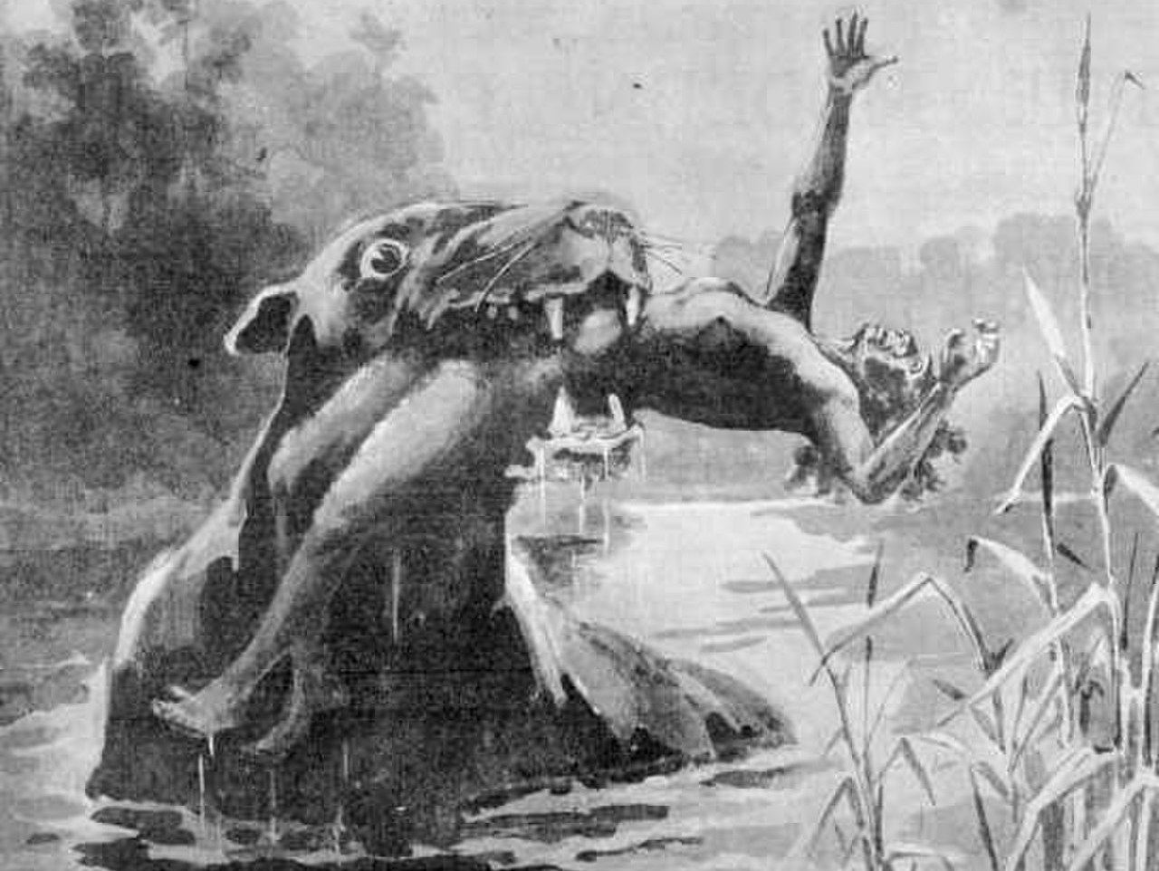 Read more about the article The Taming of the Bunyip