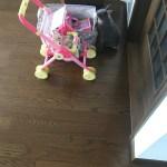 縄張り内でうさぎに噛みつかれないための対策と娘のおもちゃで遊ぶルビー