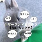 はじめてのうさぎの飼い方まとめ【お迎え/飼育用品/エサ/しつけ/病気】