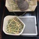 牧草(チモシー)入れの改善と換毛期のブラッシング