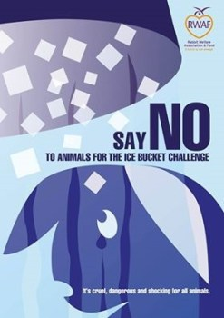 Say no to ice bucket