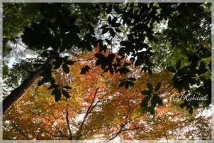 葉っぱと紅葉