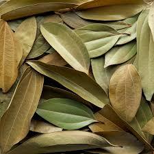 cinnamon dry leaves
