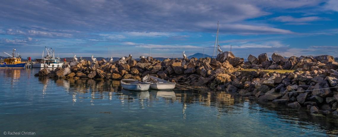 Pelican Fine Art Photography - 'Pelicans at Eden Wharf' - by Racheal Christian - rachealchristianphotography.com