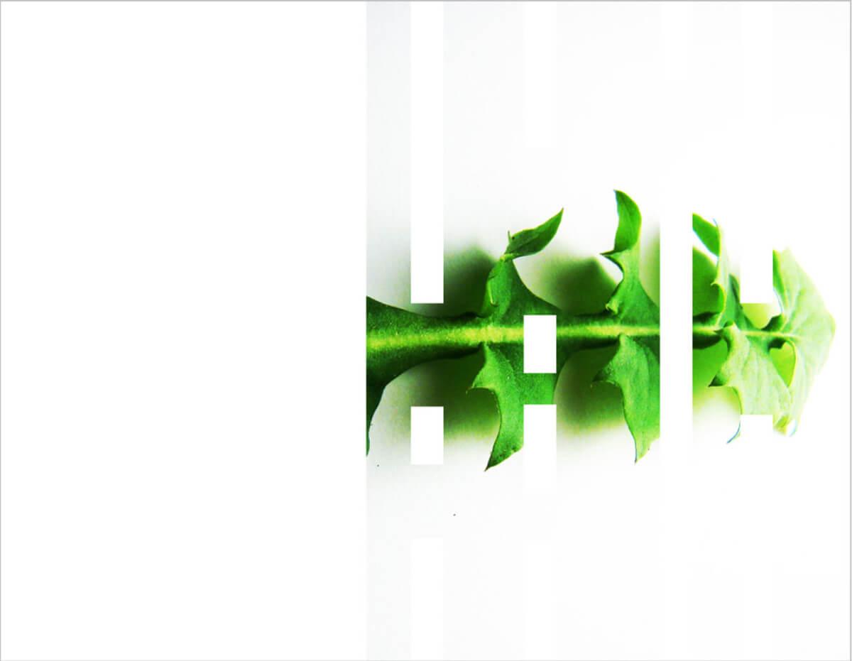 rachela abbate Dandelion_herbarium-by-Rachela-abbate herbarium