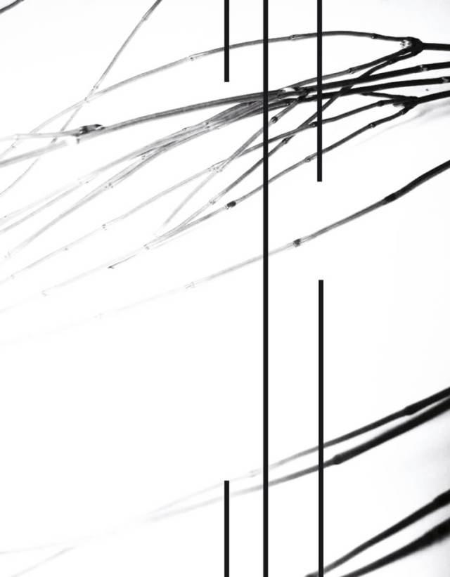Equisetum-3_herbarium-series-by-Rachela-Abbate