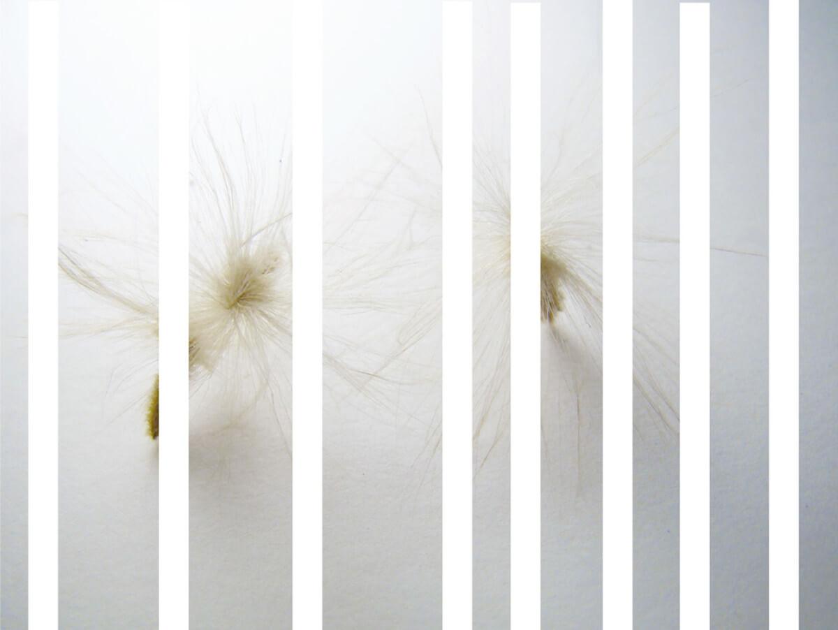 rachela abbate oleander-_2_-herbarium-series-by-Rachela-Abbate herbarium