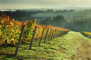 Willamette Valley   An adventure from Evergreen Escapes: Wine & Waterfalls