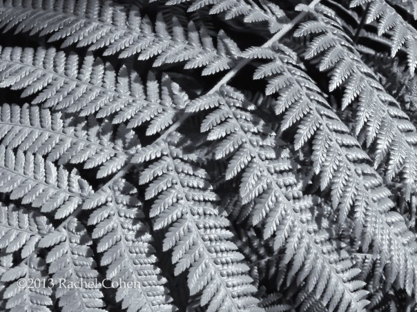 A Fern in monochrome.