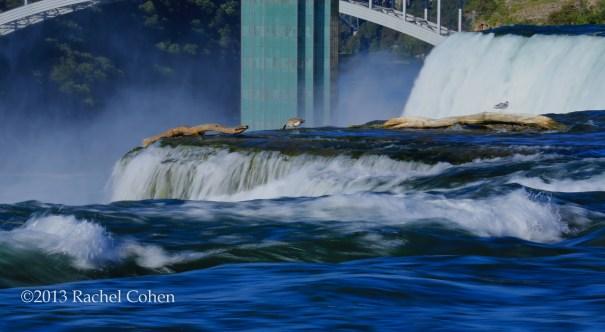"""Goose Dipping at Niagara"""