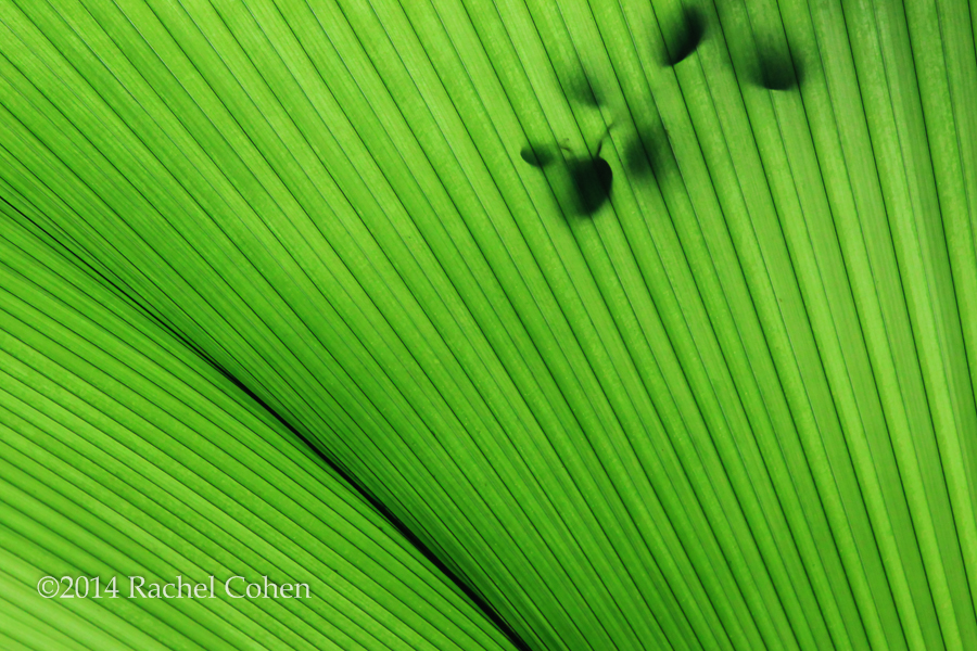 """Palm Fronds and Shadows"""