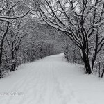"""""""In the Heart of Winter"""""""