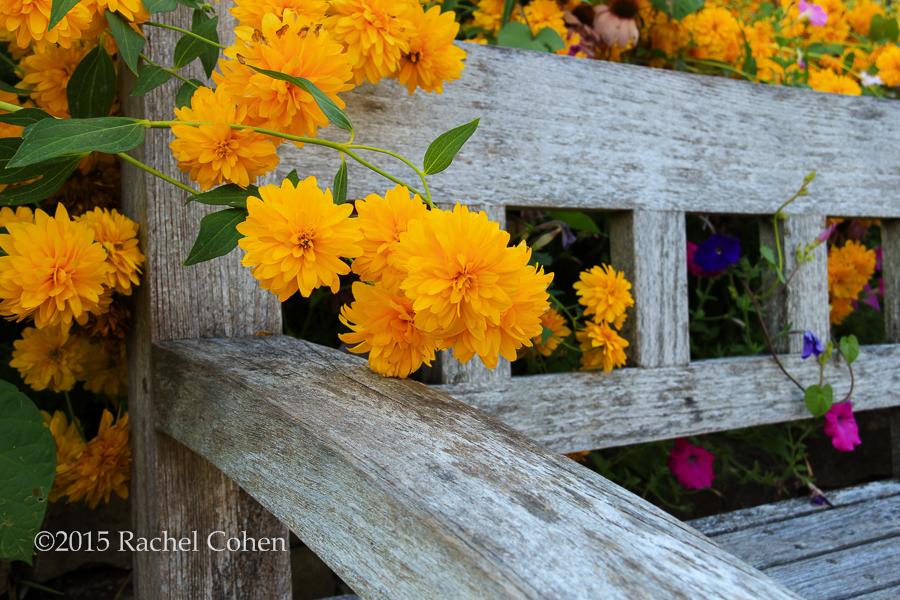 """""""Garden Bench Floral"""""""