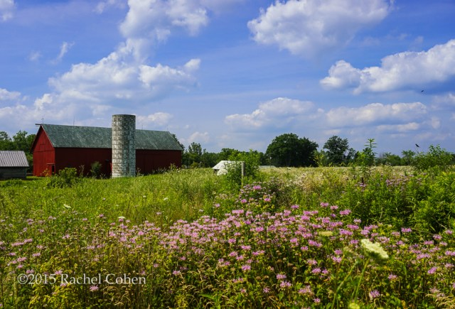 """Red Barn and Wildflowers"" The largest barn and silo as viewed from the back with wildflowers everywhere."