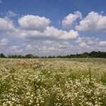Barns and Wildflowers