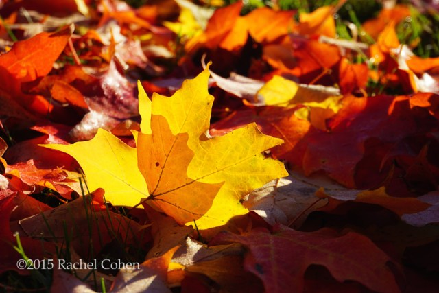 """""""Of Light and Leaves"""""""