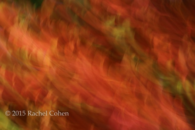 """Pure Joy"" A beautiful and colorful flow of autumn color in abstract!"
