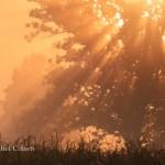 """""""Golden Rays of Light"""""""