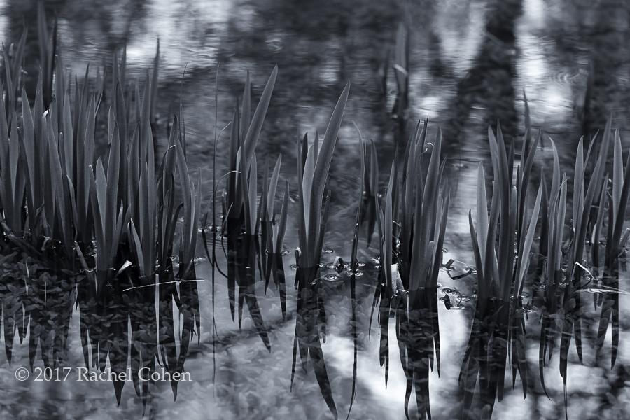 """""""Aquatic Reflections"""""""