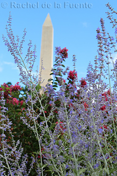 Photo of flowers in the foreground with the National Monument in the background