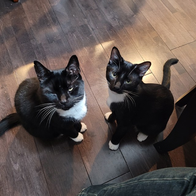 Bumbledore (left) and Ritz