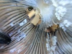 fungi.racheldragonfly-14