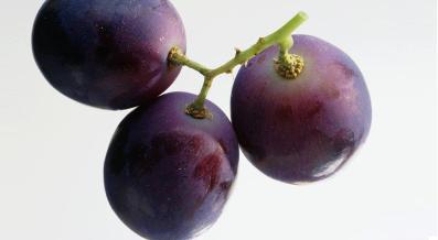 xl_2961_grape-tp