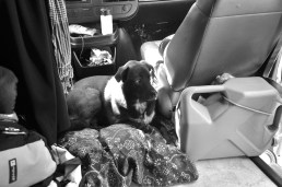 Luis' dog Lola takes her spot in his van for the drive from Birmingham to Chattanooga. Luis and Lola spent six months driving through the American West, climbing at some of the country's best spots and living out of the retrofitted van.