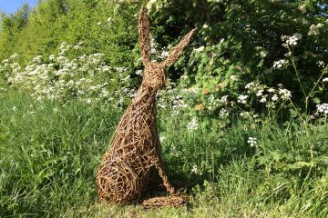 Willow Hare 2