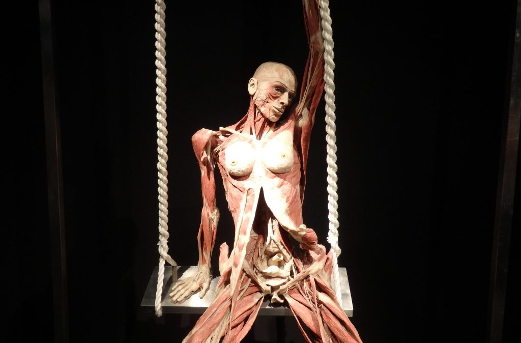 female plastinate posed on a swing
