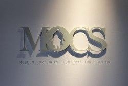 mocs-daylight-11