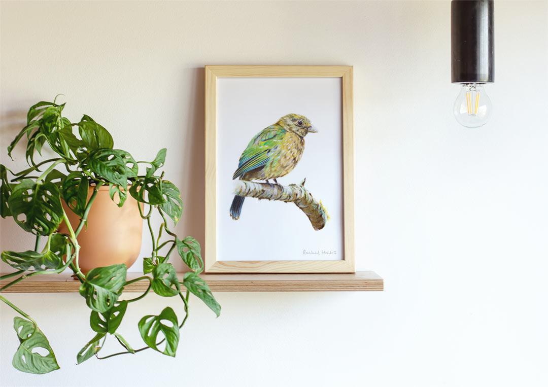 Green Catbird – Example of Framed Fine Art Print