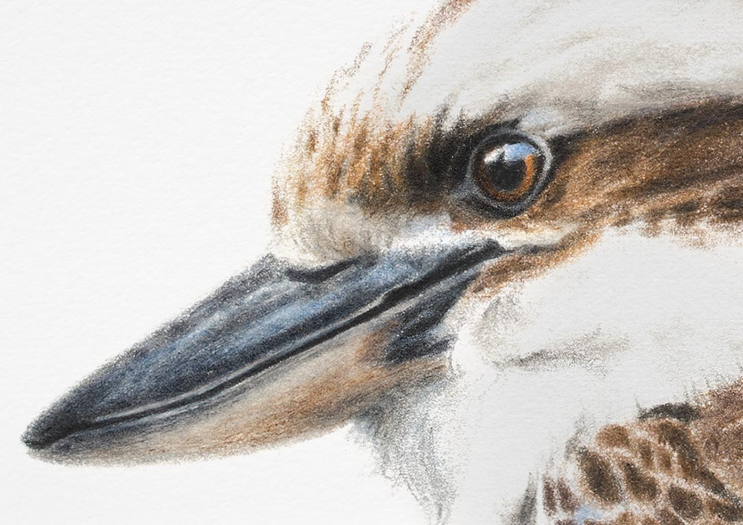 Laughing Kookaburra – Fine Art Print
