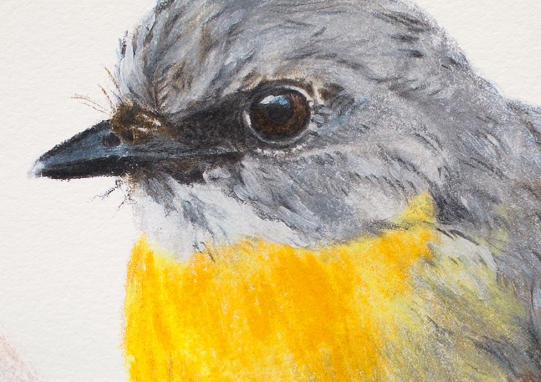 Eastern Yellow Robin – Fine Art Print