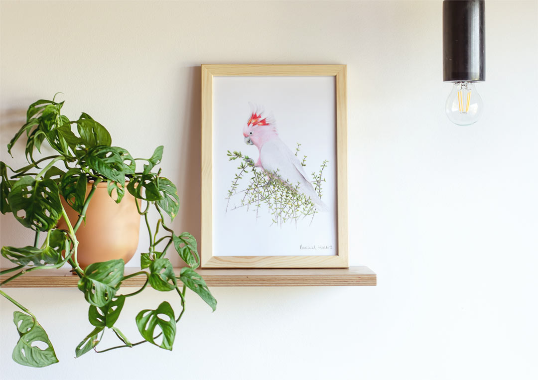 Major Mitchell's Cockatoo – Example of Framed Fine Art Print