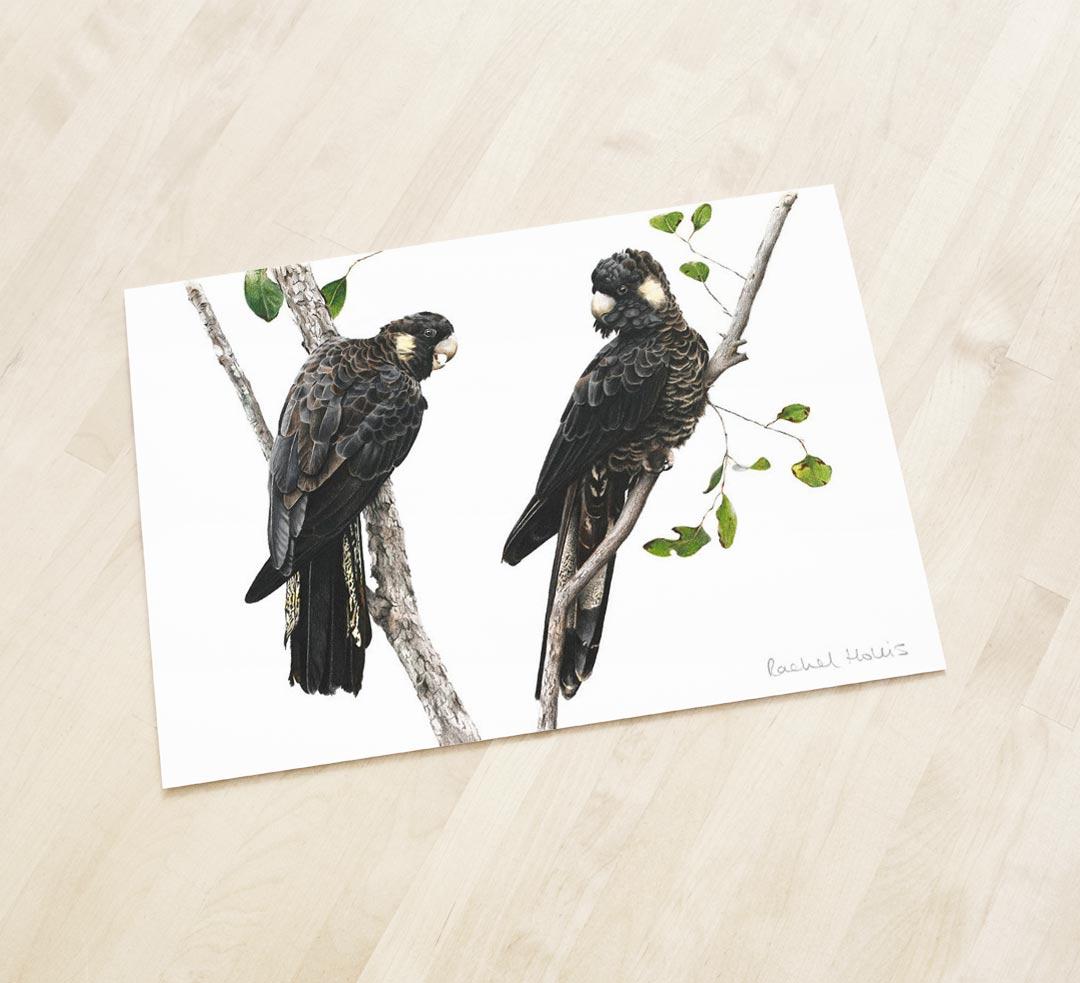 Yellow-tailed Black Cockatoos – Fine Art Print