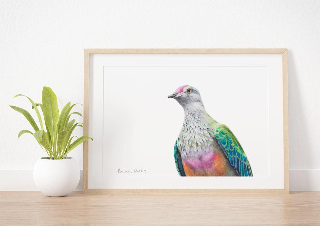Rose-crowned Fruit Dove - Example of Framed Fine Art Print