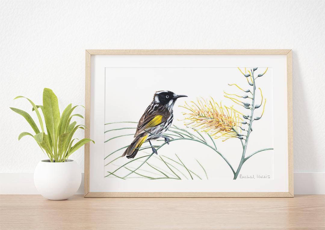 New Holland Honeyeater - Example of Framed Fine Art Print