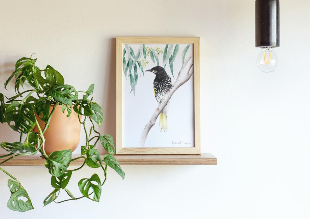 Regent Honeyeater - Example of Framed Fine Art Print