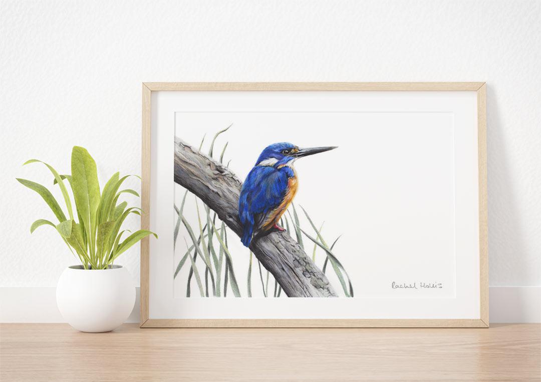 Azure Kingfisher – Example of Framed Fine Art Print