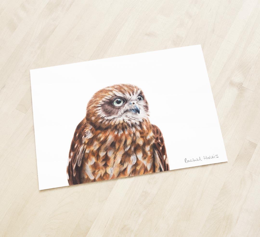 Australian Boobook Owl – Fine Art Print