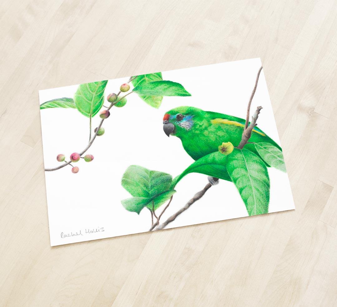 Double-eyed Fig Parrot - Fine Art Print